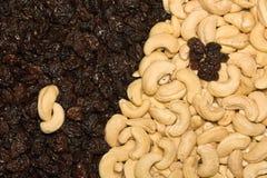 Acajoubaum und schwarze Rosinen Lizenzfreie Stockfotos