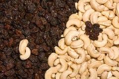 Acajoubaum und schwarze Rosinen Stockbilder