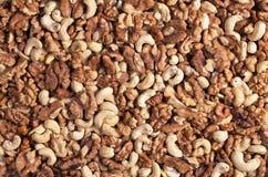 Acajoubaum und Walnüsse Lizenzfreies Stockbild