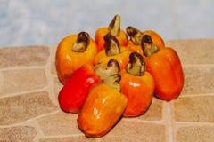 Acajoubaumfrüchte Stockfotos