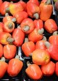 Acajoubaumfrüchte Lizenzfreies Stockfoto