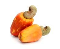 Acajoubaumfrucht Stockbild