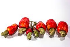 Acajoubaumfrucht und -muttern Lizenzfreies Stockbild