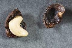 Acajounüsse - Anacardium occidentale Stockbilder