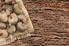 Acajounüsse - Anacardium occidentale Beschneidungspfad eingeschlossen Lizenzfreie Stockfotos