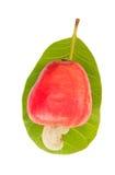 Acajounuss Apple Stockbild