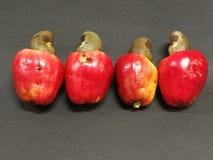 Acajounussfrüchte Stockbilder