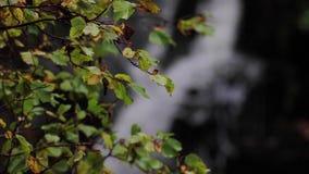 Acalmando-se, acalme a cachoeira durante setembro em Escócia As águas da vida filme