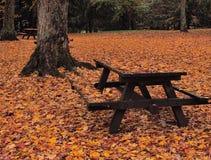Acampamento coberto nas folhas imagens de stock royalty free