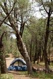 Acampamento da floresta imagens de stock royalty free