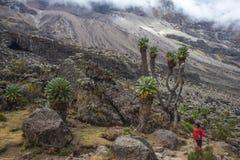 Acampamento de Kilimanjaro Barranco Imagens de Stock