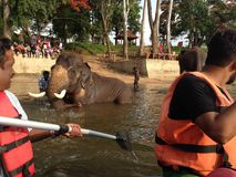 Acampamento do elefante foto de stock