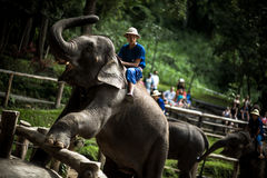 Acampamento do elefante de Maesa Imagens de Stock