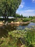 Acampamento dos waterlilies dos lírios de água da árvore do pássaro do rio do céu da natureza imagem de stock royalty free