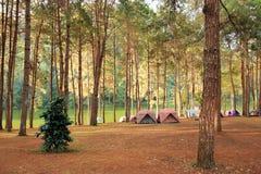 Acampamento na floresta imagens de stock royalty free