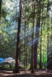 Acampamento no noroeste pacfic Fotografia de Stock Royalty Free