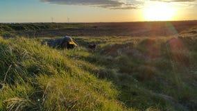 Acampamento selvagem com cão de charlie Fotografia de Stock Royalty Free