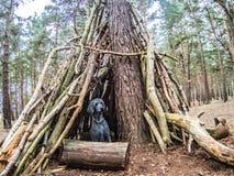 Acampamento temporário da floresta feito dos logs com cão fotos de stock