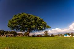Acampando debajo de árbol grande, África Fotografía de archivo libre de regalías