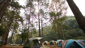 Acampando en naturaleza del bosque, acampando y tienda debajo del bosque del pino adentro en el pino Forest Park de Pang Ung, Pan almacen de metraje de vídeo