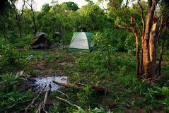 Acampando o a selva do parque nacional da toupeira, Gana foto de stock