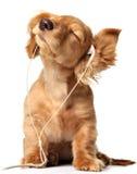 Acanalar el perrito Imagen de archivo libre de regalías