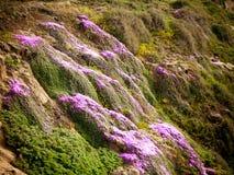Acantilado florecido imagenes de archivo