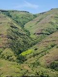 Acantilados rocosos e hierba verde Fotografía de archivo libre de regalías