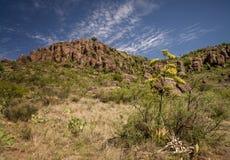 Acantilados y plantas del desierto Imágenes de archivo libres de regalías