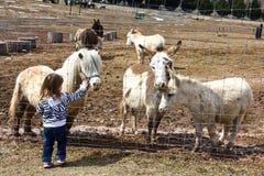 Acariciar animales del campo Imagen de archivo libre de regalías