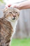 Acariciar el gato Foto de archivo libre de regalías