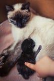 Acariciar el pequeño gato Foto de archivo