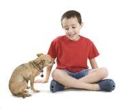 Acariciar el perro foto de archivo libre de regalías