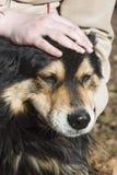 Acariciar un perro cómodo Fotos de archivo libres de regalías