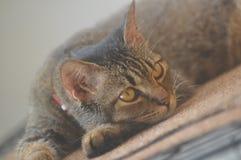 Acaricie el gato Fotos de archivo