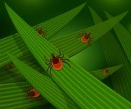 Acarides dans l'herbe verte grande Image stock