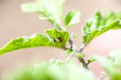Acarides rouges sur son nid Photographie stock libre de droits