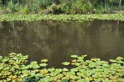 Acarlar longoz eregli view. There are all shades of green Stock Photos