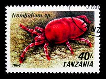 Acaro rosso del velluto (PS di Trombidium ), serie delle aracnidi, circa 1994 Fotografia Stock