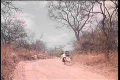 Acarree estrecho a la mujer desaparecida con la maleta que camina en el camino de tierra metrajes