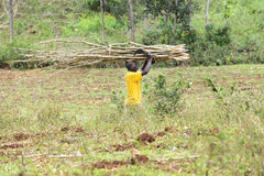 Acarreo de ramas en Haití Imágenes de archivo libres de regalías