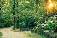 Accédez à la route de gravier parmi les arbres luxuriants grands au coucher du soleil Photo libre de droits