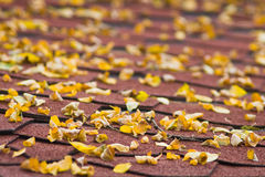 Accacia leafs on house roof. In autumn Royalty Free Stock Photography