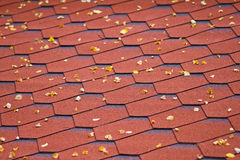 Accacia leafs on roof Royalty Free Stock Image