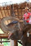Accampamento dell'elefante, Tailandia Fotografia Stock Libera da Diritti