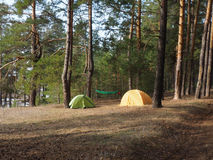 Accampandosi e tenda sotto l'abetaia nel tramonto Fotografia Stock Libera da Diritti
