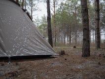 Accampandosi nella foresta del pino Fotografia Stock Libera da Diritti