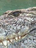 Accanto al coccodrillo Fotografie Stock