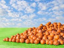 Accatasti il grande raccolto rustico naturale arancio del campo della toppa delle zucche Immagine Stock