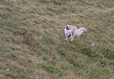 Acceleration of dog from a standing start stock images